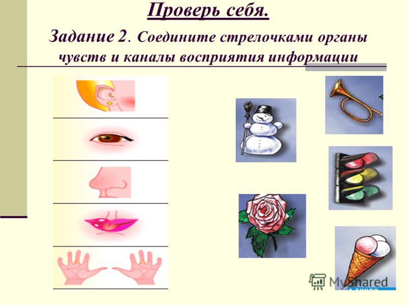 Проверь себя. Задание 2. Соедините стрелочками органы чувств и каналы восприятия информации