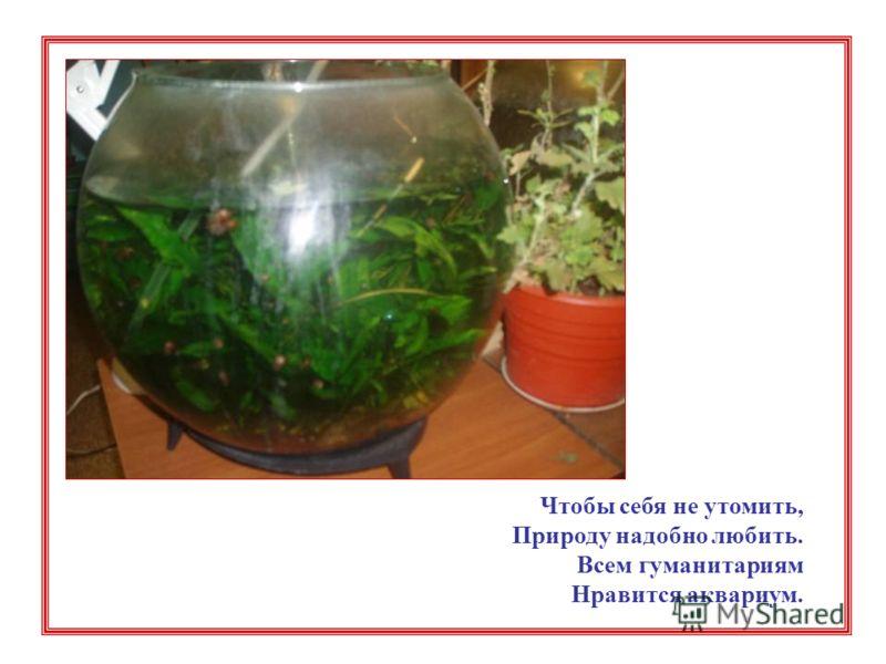 Чтобы себя не утомить, Природу надобно любить. Всем гуманитариям Нравится аквариум.