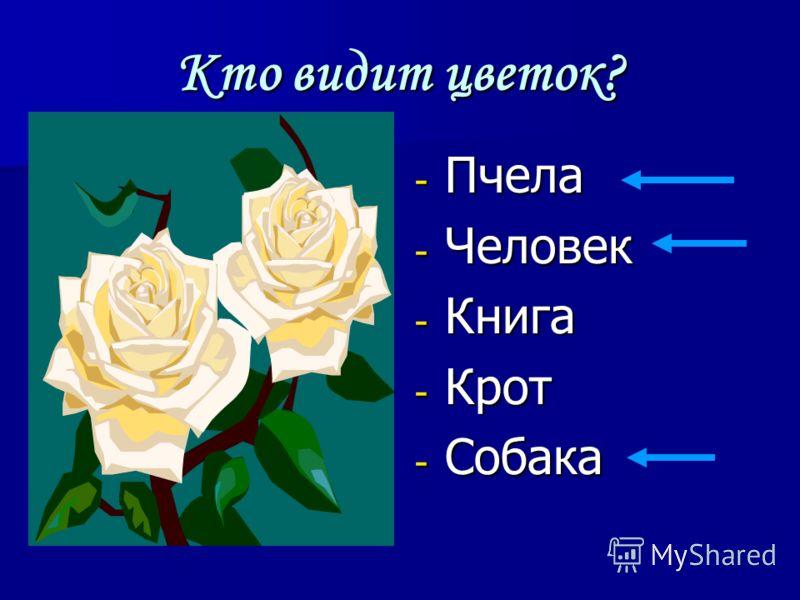 Кто видит цветок? - Пчела - Человек - Книга - Крот - Собака