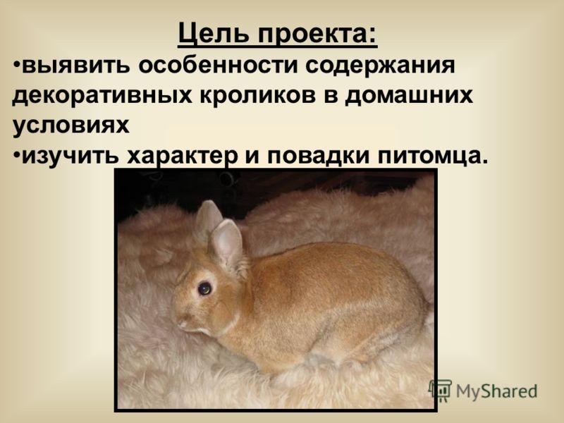 Цель проекта: выявить особенности содержания декоративных кроликов в домашних условиях изучить характер и повадки питомца.