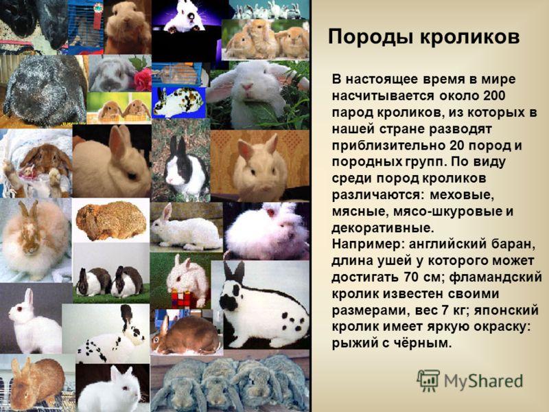 Породы кроликов В настоящее время в мире насчитывается около 200 парод кроликов, из которых в нашей стране разводят приблизительно 20 пород и породных групп. По виду среди пород кроликов различаются: меховые, мясные, мясо-шкуровые и декоративные. Нап