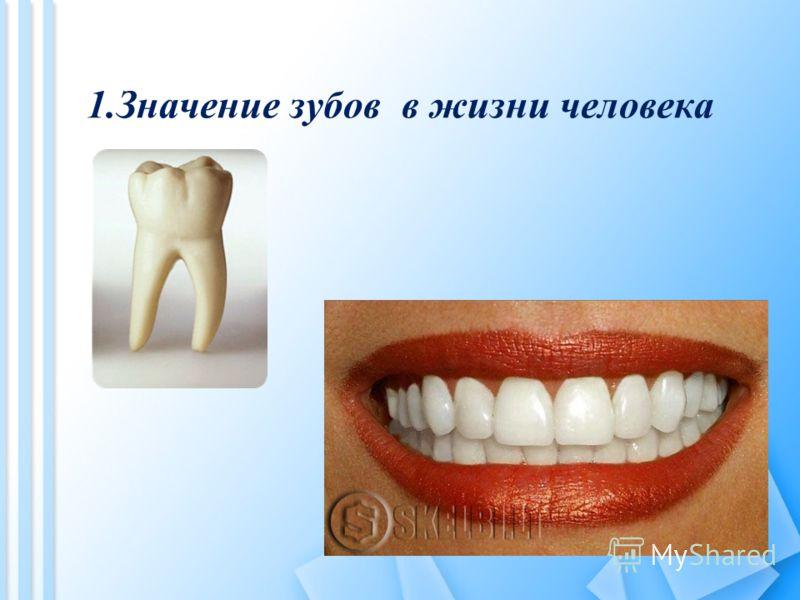 1.Значение зубов в жизни человека