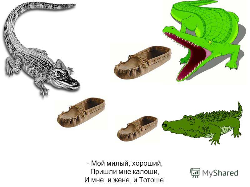 А потом позвонил крокодил и со слезами просил: