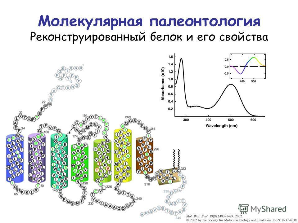 Молекулярная палеонтология Реконструированный белок и его свойства