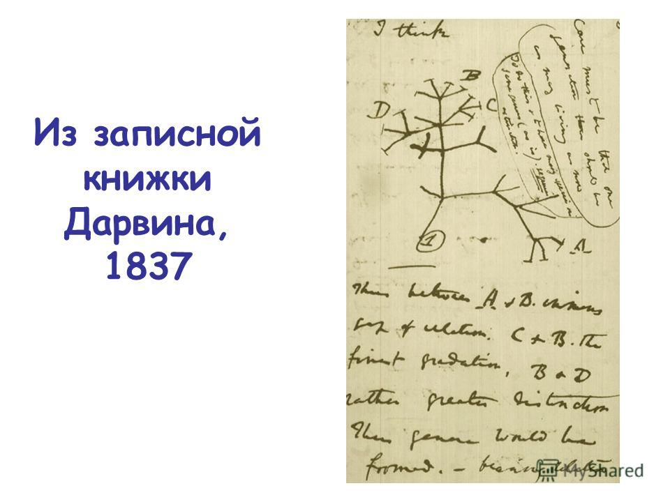 Из записной книжки Дарвина, 1837