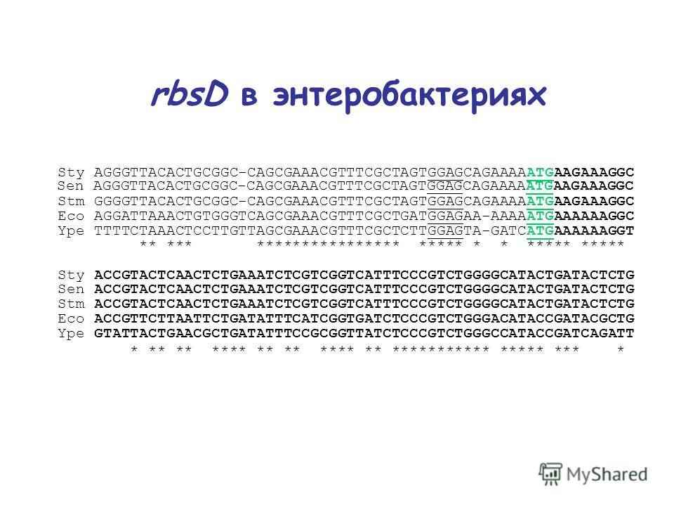 rbsD в энтеробактериях Sty AGGGTTACACTGCGGC-CAGCGAAACGTTTCGCTAGTGGAGCAGAAAAATGAAGAAAGGC Sen AGGGTTACACTGCGGC-CAGCGAAACGTTTCGCTAGTGGAGCAGAAAAATGAAGAAAGGC Stm GGGGTTACACTGCGGC-CAGCGAAACGTTTCGCTAGTGGAGCAGAAAAATGAAGAAAGGC Eco AGGATTAAACTGTGGGTCAGCGAAACGT