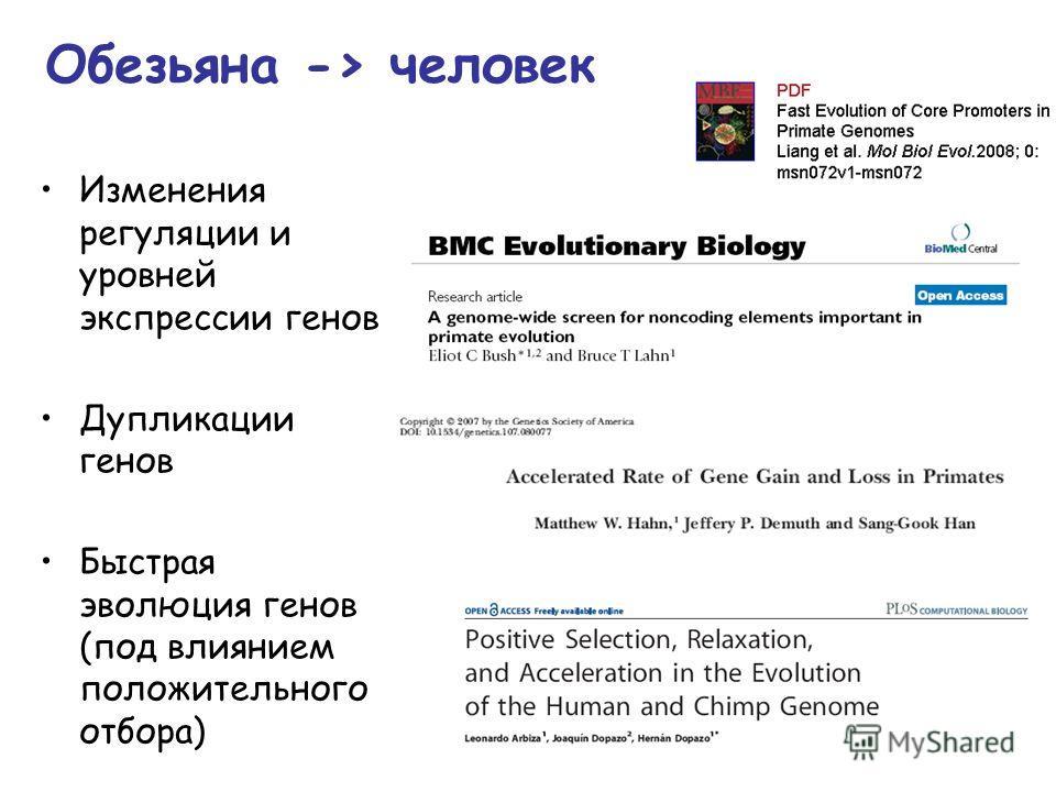 Обезьяна -> человек Изменения регуляции и уровней экспрессии генов Дупликации генов Быстрая эволюция генов (под влиянием положительного отбора)