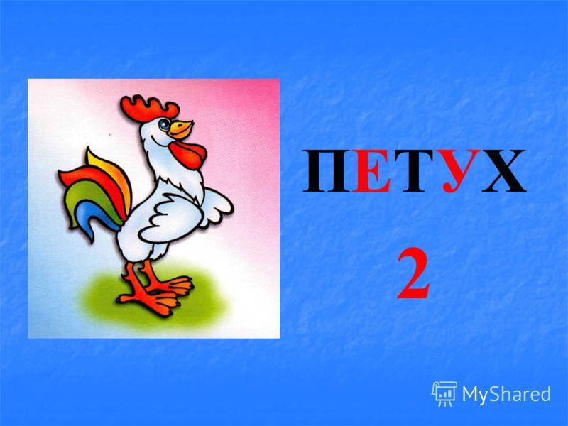 КИТКИТ 1