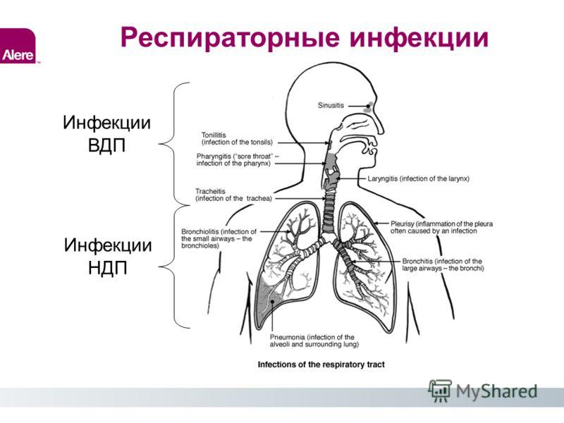 Инфекции ВДП Инфекции НДП Респираторные инфекции