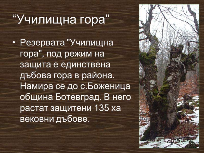 Училищна гора Резервата Училищна гора, под режим на защита е единствена дъбова гора в района. Намира се до с.Боженица община Ботевград. В него растат защитени 135 ха вековни дъбове.