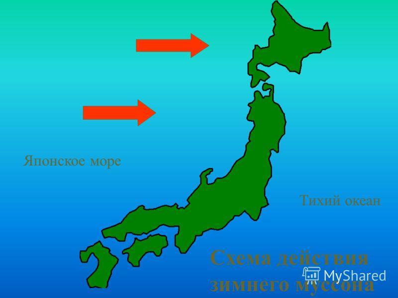 Схема действия зимнего муссона Японское море Тихий океан