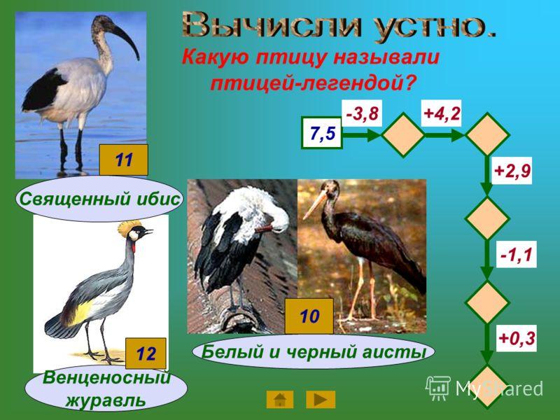Какую птицу называли птицей-легендой? Венценосный журавль 7,5 -3,8+4,2 -1,1 +2,9 +0,3 12 Священный ибис 11 Белый и черный аисты 10