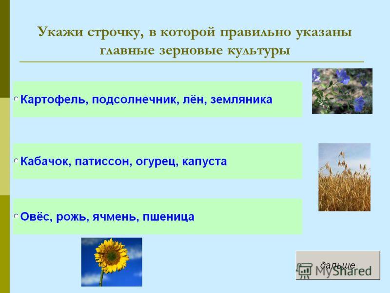 Укажи строчку, в которой правильно указаны главные зерновые культуры