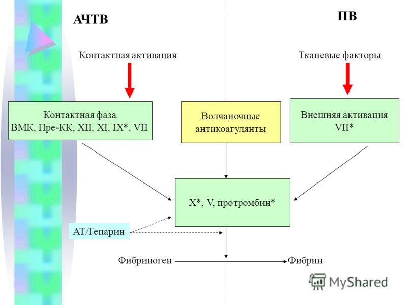 АЧТВ ПВ Контактная активация Тканевые факторы Внешняя активация VII* ФибриногенФибрин Волчаночные антикоагулянты X*, V, протромбин* Контактная фаза ВМК, Пре-КК, XII, XI, IX*, VII АТ/Гепарин
