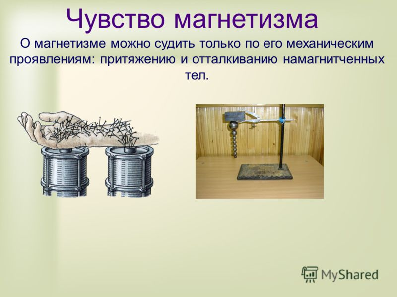 Чувство магнетизма О магнетизме можно судить только по его механическим проявлениям: притяжению и отталкиванию намагнитченных тел.