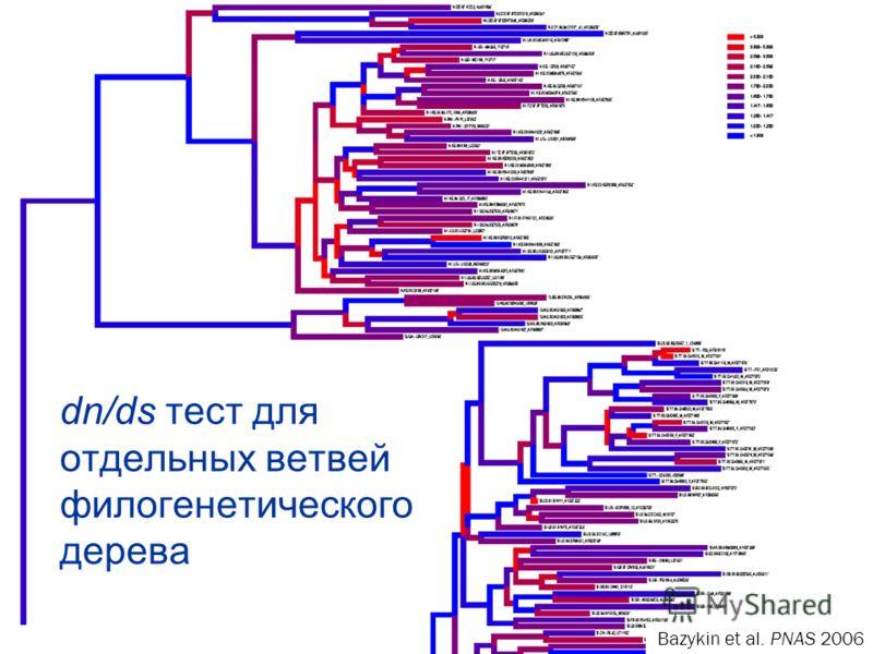 dn/ds тест для отдельных ветвей филогенетического дерева Bazykin et al. PNAS 2006