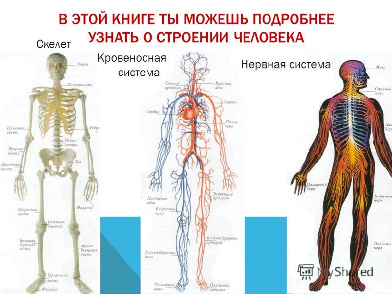 В ЭТОЙ КНИГЕ ТЫ МОЖЕШЬ ПОДРОБНЕЕ УЗНАТЬ О СТРОЕНИИ ЧЕЛОВЕКА Скелет Кровеносная система Нервная система