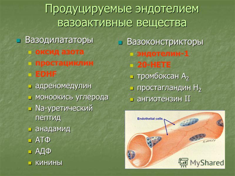 Продуцируемые эндотелием вазоактивные вещества Вазодилататоры Вазодилататоры оксид азота простациклин EDHF адреномедулин адреномедулин моноокись углерода моноокись углерода Na-уретический пептид Na-уретический пептид анадамид анадамид АТФ АТФ АДФ АДФ