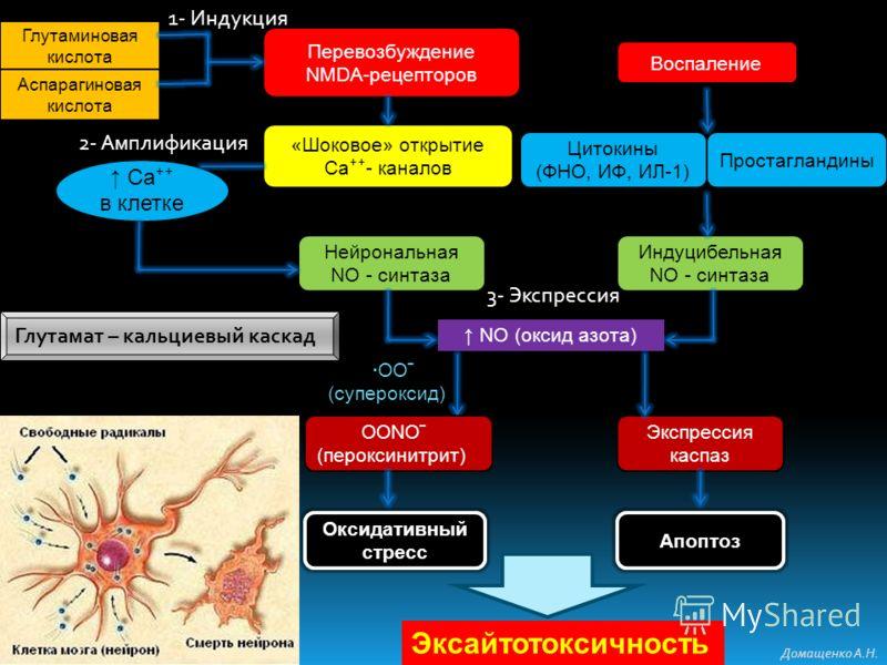 Глутаминовая кислота Аспарагиновая кислота «Шоковое» открытие Са - каналов Эксайтотоксичность Перевозбуждение NMDA-рецепторов Нейрональная NO - синтаза Са в клетке Апоптоз NO (оксид азота) ·ООˉ (супероксид) Оксидативный стресс Экспрессия каспаз Индуц