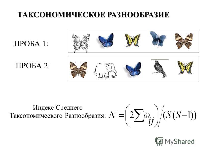 ТАКСОНОМИЧЕСКОЕ РАЗНООБРАЗИЕ ПРОБА 1: ПРОБА 2: Индекс Среднего Таксономического Разнообразия: