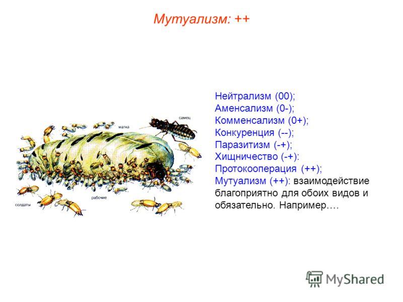 Нейтрализм (00); Аменсализм (0-); Комменсализм (0+); Конкуренция (--); Паразитизм (-+); Хищничество (-+): Протокооперация (++); Мутуализм (++): взаимодействие благоприятно для обоих видов и обязательно. Например…. Мутуализм: ++