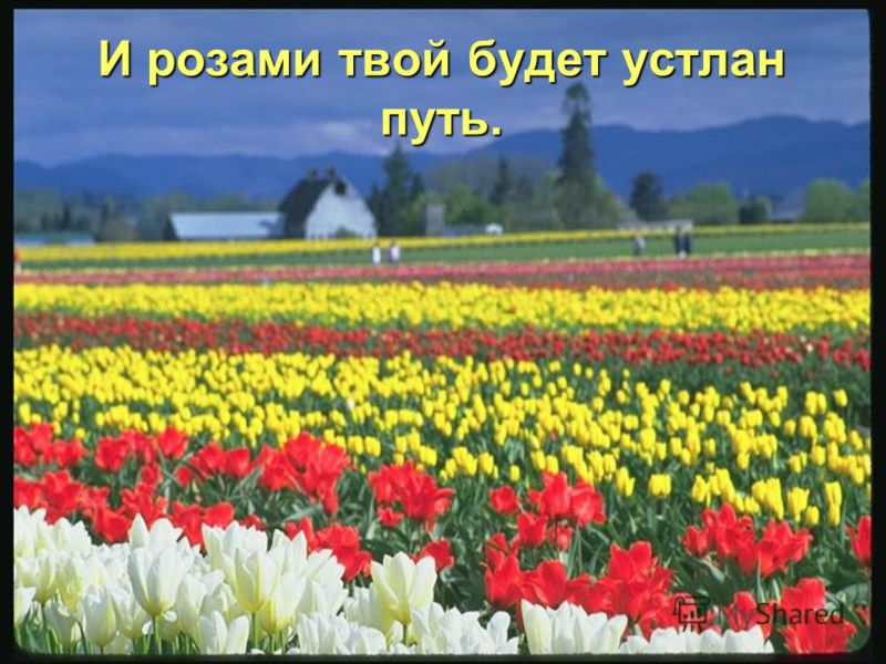 Пусть день твой будет солнечным, прекрасным,