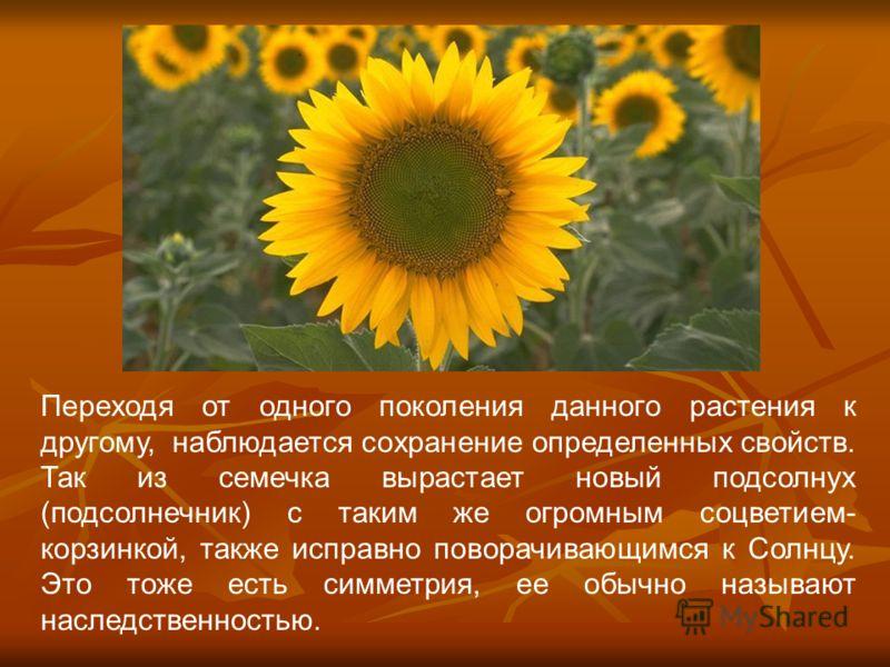 Переходя от одного поколения данного растения к другому, наблюдается сохранение определенных свойств. Так из семечка вырастает новый подсолнух (подсолнечник) с таким же огромным соцветием- корзинкой, также исправно поворачивающимся к Солнцу. Это тоже