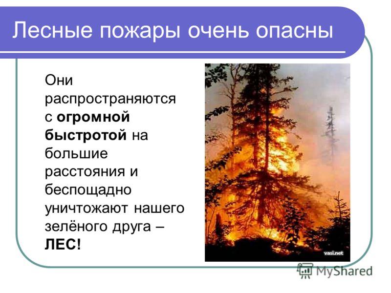 Лесные пожары очень опасны Они распространяются с огромной быстротой на большие расстояния и беспощадно уничтожают нашего зелёного друга – ЛЕС!