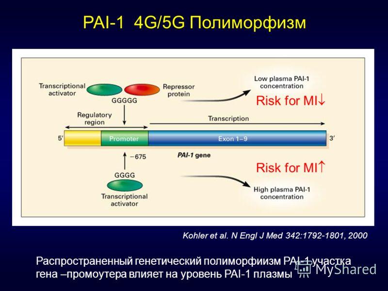 PAI-1 4G/5G Полиморфизм Risk for MI Kohler et al. N Engl J Med 342:1792-1801, 2000 Risk for MI Распространенный генетический полиморфиизм PAI-1 участка гена –промоутера влияет на уровень PAI-1 плазмы