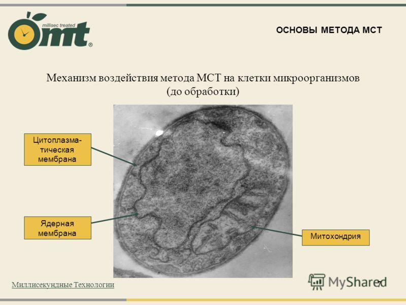 7 Механизм воздействия метода МСТ на клетки микроорганизмов (до обработки) Митохондрия Ядерная мембрана Цитоплазма- тическая мембрана ОСНОВЫ МЕТОДА МСТ Миллисекундные Технологии