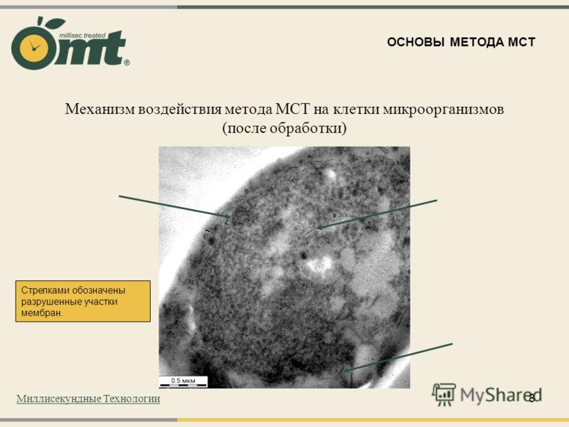 8 Механизм воздействия метода МСТ на клетки микроорганизмов (после обработки) Стрелками обозначены разрушенные участки мембран. ОСНОВЫ МЕТОДА МСТ Миллисекундные Технологии