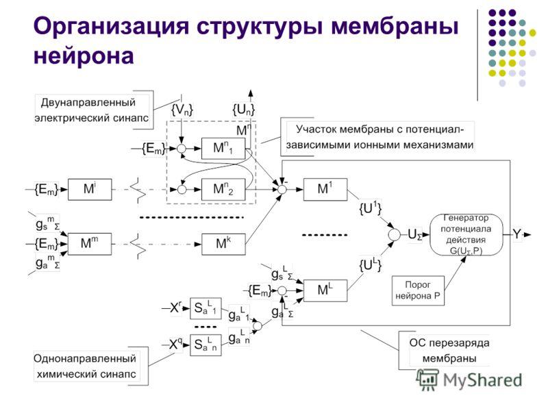 Организация структуры мембраны нейрона