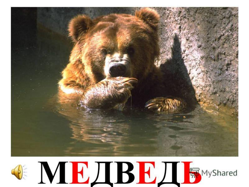 ВОРОБЕЙВОРОБЕЙ
