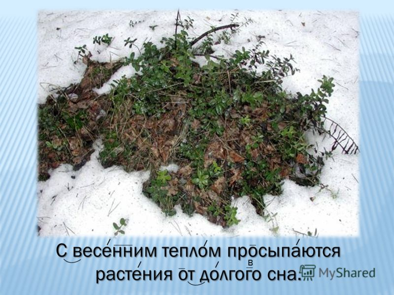 С весенним теплом просыпаются растения от долгого сна. в