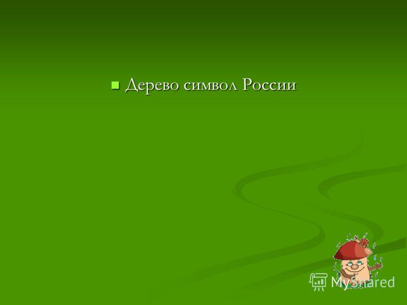 Дерево символ России Дерево символ России