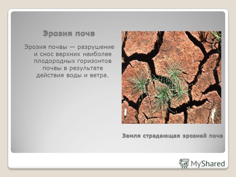Эрозия почв Эрозия почвы разрушение и снос верхних наиболее плодородных горизонтов почвы в результате действия воды и ветра. Земля страдающая эрозией почв