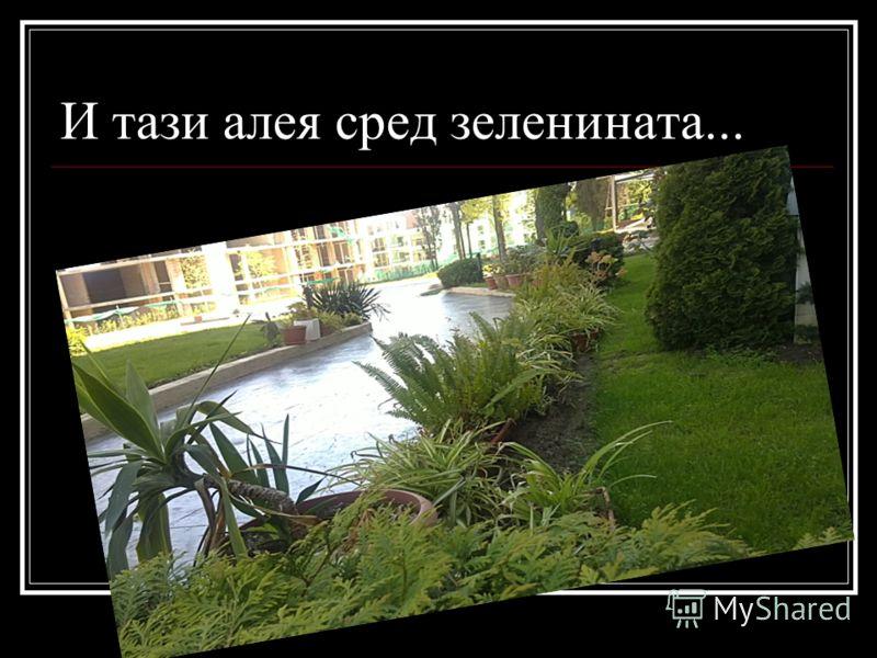 И тази алея сред зеленината...