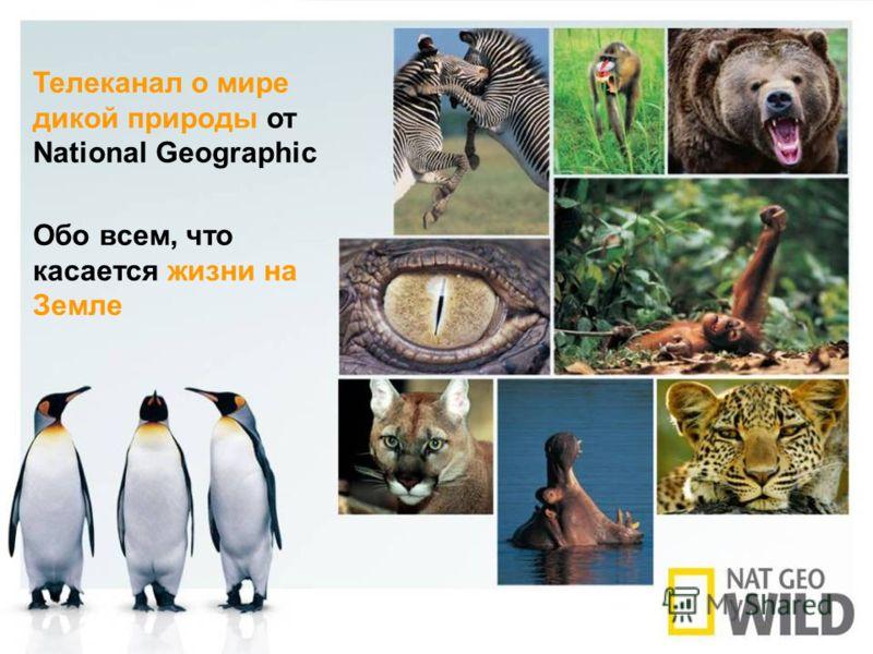 Телеканал о мире дикой природы от National Geographic Обо всем, что касается жизни на Земле