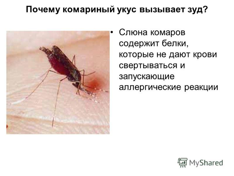 Почему комариный укус вызывает зуд? Слюна комаров содержит белки, которые не дают крови свертываться и запускающие аллергические реакции