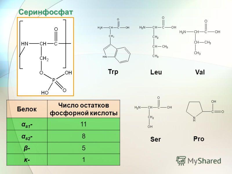 Серинфосфат Белок Число остатков фосфорной кислоты αs1-αs1-11 αs2-αs2-8 β-β-5 κ-κ-1 Trp LeuVal Ser Pro