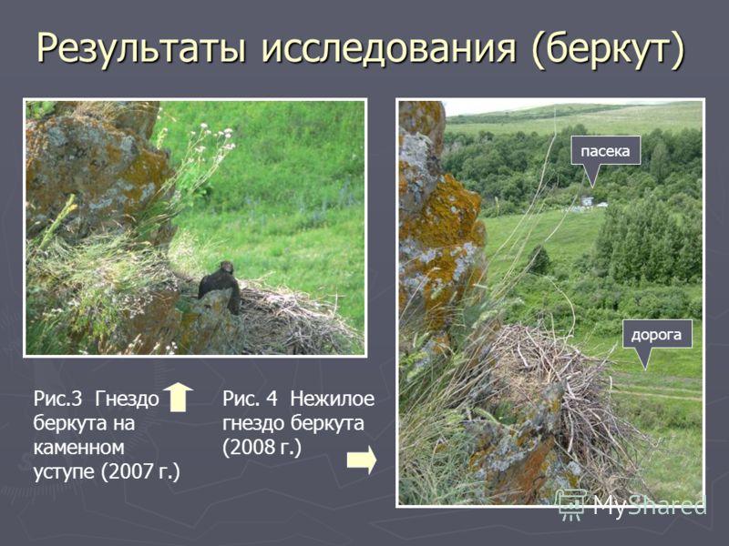 Результаты исследования (беркут) Рис. 4 Нежилое гнездо беркута (2008 г.) Рис.3 Гнездо беркута на каменном уступе (2007 г.) пасека дорога