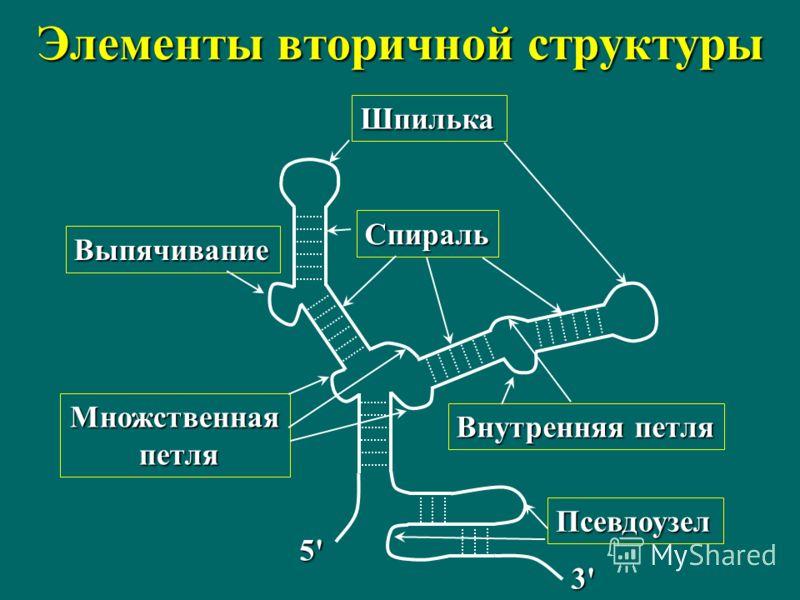 Элементы вторичной структуры Шпилька Спираль Внутренняя петля Множственная петля петля Выпячивание Псевдоузел 5'5'5'5' 3'