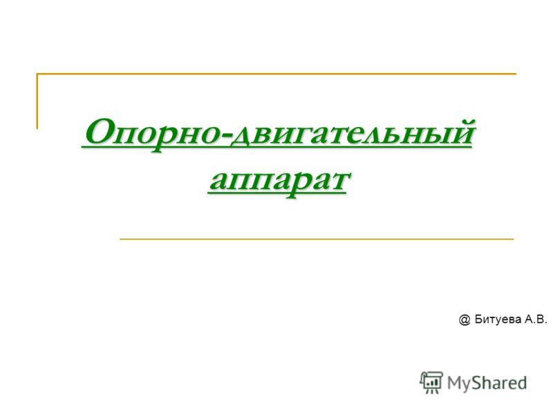 Опорно-двигательный аппарат @ Битуева А.В.