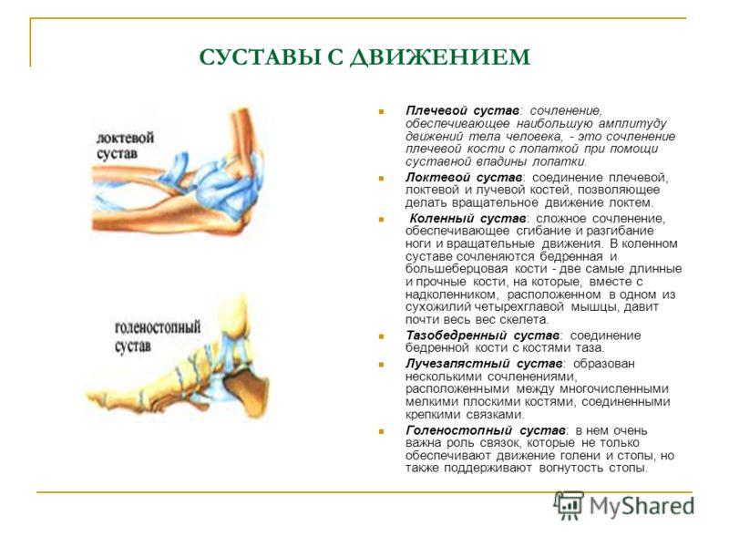 СУСТАВЫ С ДВИЖЕНИЕМ Плечевой сустав: сочленение, обеспечивающее наибольшую амплитуду движений тела человека, - это сочленение плечевой кости с лопаткой при помощи суставной впадины лопатки. Локтевой сустав: соединение плечевой, локтевой и лучевой кос