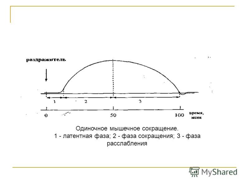 Одиночное мышечное сокращение. 1 - латентная фаза; 2 - фаза сокращения; 3 - фаза расслабления