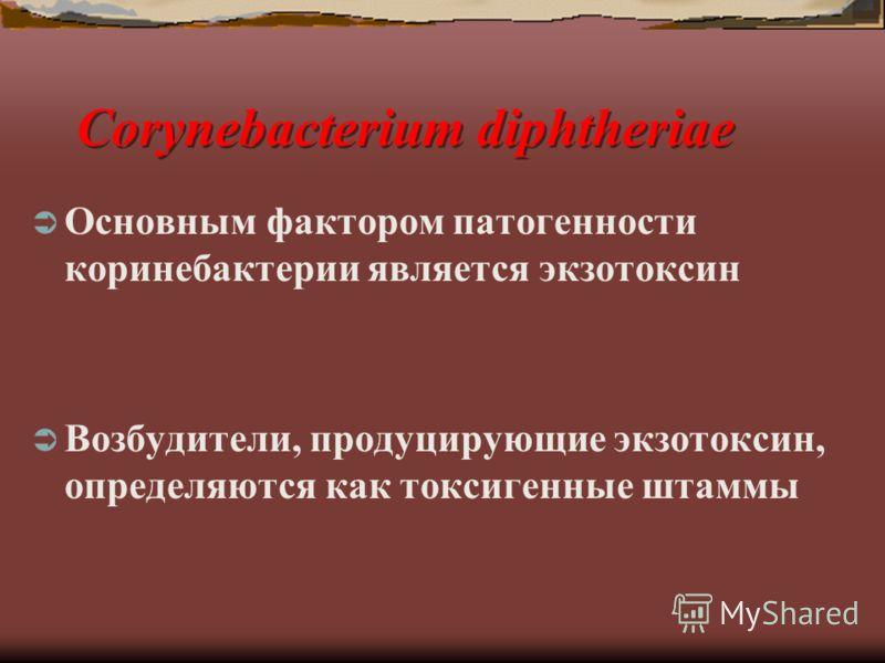 Corynebacterium diphtheriae Основным фактором патогенности коринебактерии является экзотоксин Возбудители, продуцирующие экзотоксин, определяются как токсигенные штаммы