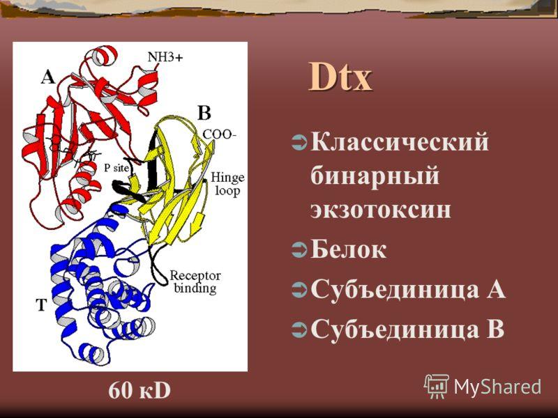 Dtx Классический бинарный экзотоксин Белок Субъединица А Субъединица В 60 кD