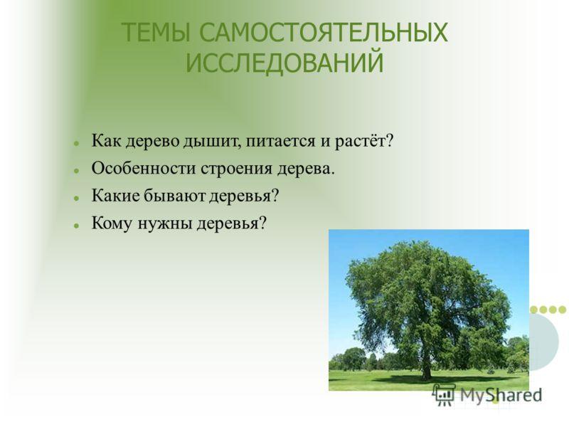 ТЕМЫ САМОСТОЯТЕЛЬНЫХ ИССЛЕДОВАНИЙ Как дерево дышит, питается и растёт? Особенности строения дерева. Какие бывают деревья? Кому нужны деревья?