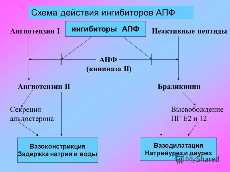 Схема действия ингибиторов АПФ ингибиторы АПФ АПФ (кининаза II) Ангиотензин IНеактивные пептиды Ангиотензин IIБрадикинин Вазоконстрикция Задержка натрия и воды Вазодилатация Натрийурез и диурез Секреция альдостерона Высвобождение ПГ Е2 и 12