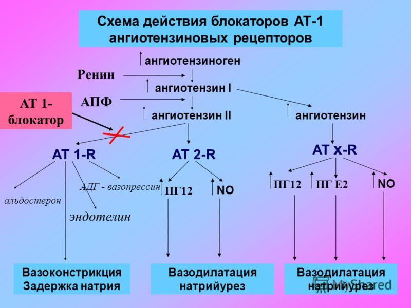 Схема действия блокаторов АТ-1 ангиотензиновых рецепторов ангиотензиноген ангиотензин I ангиотензин IIангиотензин АТ 1-RАТ 2-R AT x -R Вазоконстрикция Задержка натрия Вазодилатация натрийурез Вазодилатация натрийурез Ренин АПФ АТ 1- блокатор альдосте